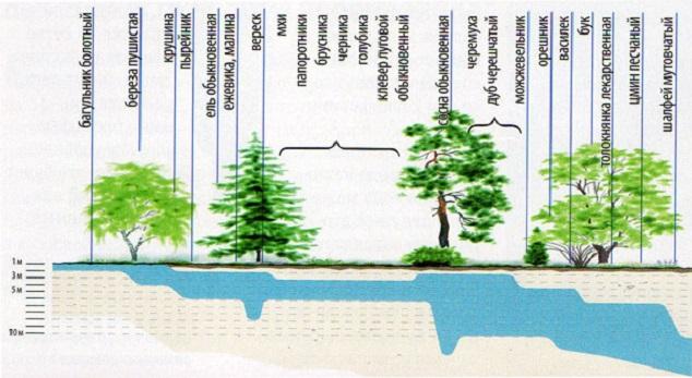 Список растений и глубина залегания водоносного слоя